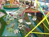 flora_Olomouc_2011_020